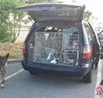 Pet transport to Hungary